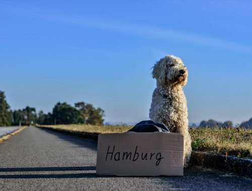 moving your pet to Germany
